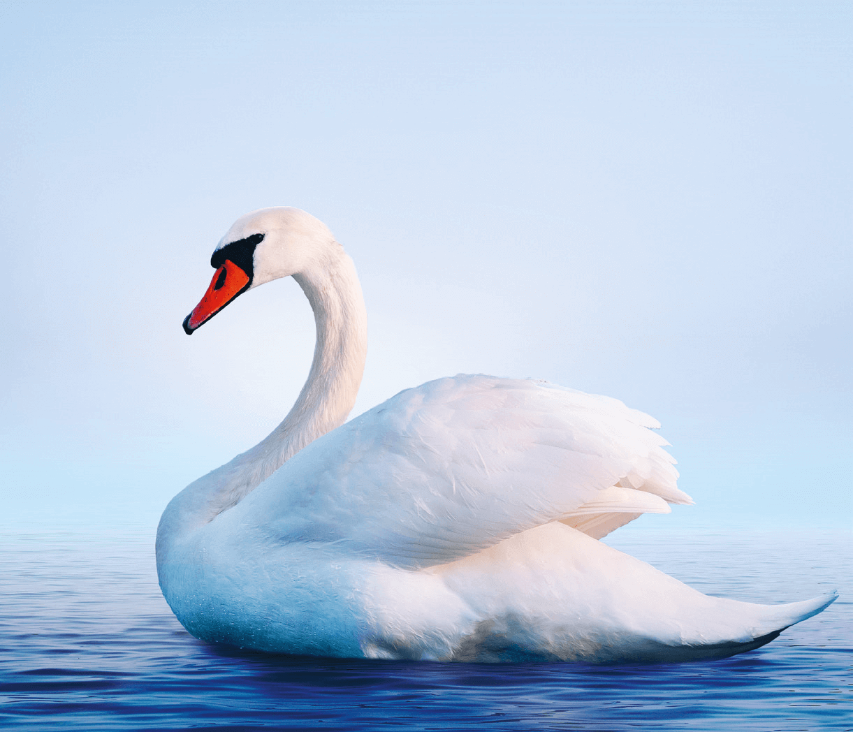 Swan Sequence